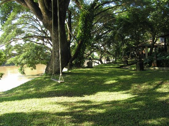 โรงแรมบ้านน้ำปิง: Large expansive area of trees and grass between the bungalows and the River