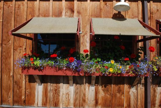 Cafe Olga: Festive flowers