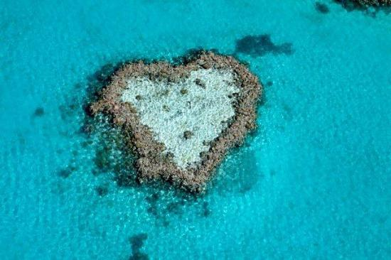 ‪‪Great Barrier Reef‬, أستراليا: World Famous Heart Reef