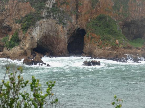 Cape Convoy Tours: Knysna Featherbed Reserve