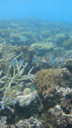 Navutu Stars Fiji Hotel & Resort: Nearby snorkelling