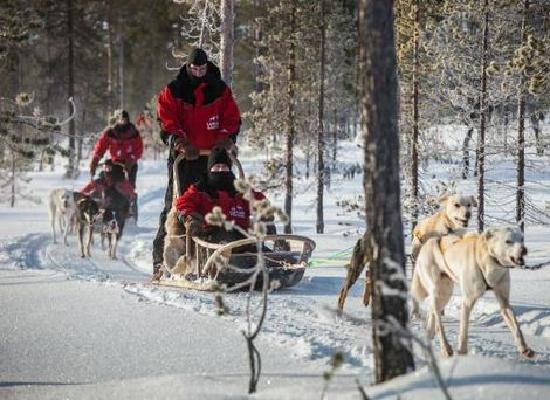 Lapland Safaris: getlstd_property_photo