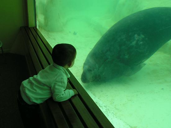 Aquarium de Biarritz: rencontre du 3ème type