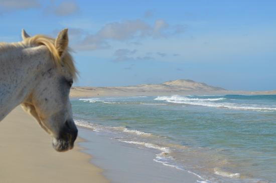 Royal Decameron Boa Vista: Horse on beach !