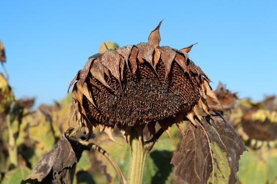 Auberge du Balestie: Adjacent crops