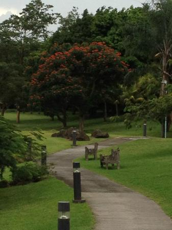 Costa Rica Marriott Hotel San Jose: Walking pathway behind the hotel