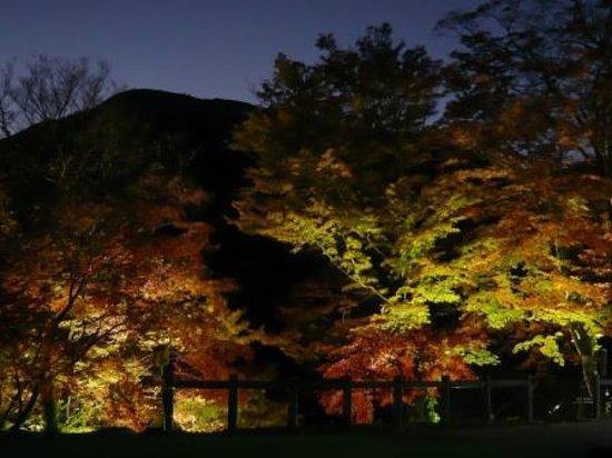 Yokkaichi, Japan: 紅葉