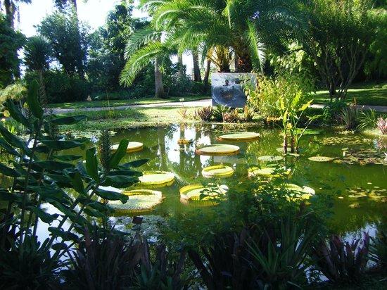 Jardin botanique et exotique val rahmeh menton all you for Jardin et