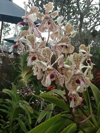 Munduk Moding Plantation: Stunning orchids