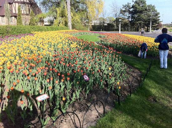 Rideau Canal: Dow's Lake flower beds