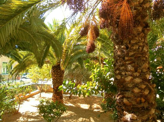 Mare Monte Beach Hotel: .
