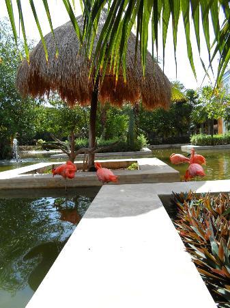 IBEROSTAR Paraiso Del Mar: Flamingos
