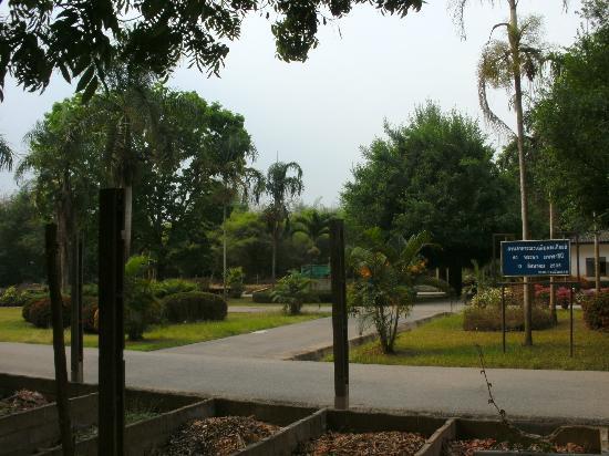 Loei Palace Hotel: Garten