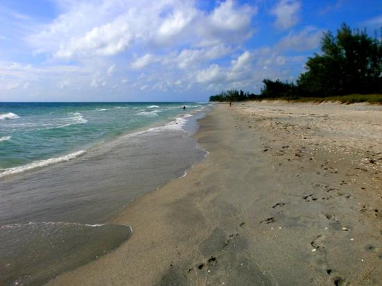 Rotonda West, FL: Nearby Englewood beach