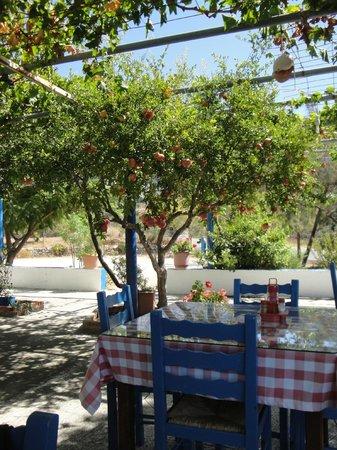 Old Pyli Taverna