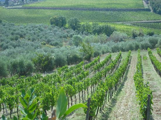 Tuscan Tour Time: One of the many rolling hills of olives and grapes