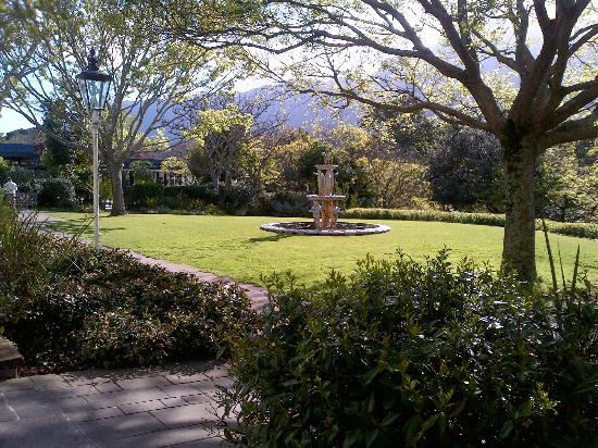 Vineyard Hotel: Delightful Hotel Garden with Resident Tortoises