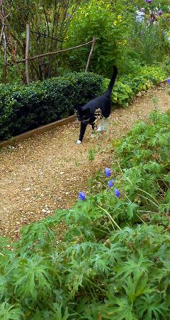 Painswick Rococo Garden: The gardens cat