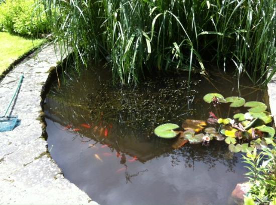 Kettle's Cottage: lovely pond