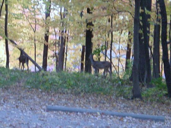 Deer picture of shabbona lake state park shabbona for Shabbona lake fishing report