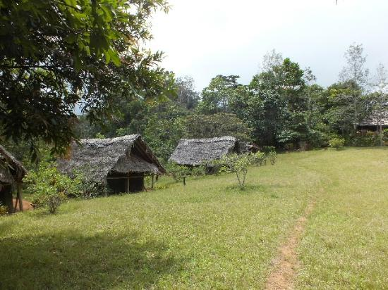 Amani Forest Camp (Emau Hill): View of Tents.