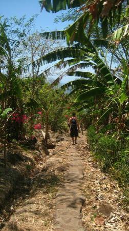 El Zopilote: trail