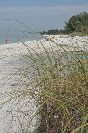 Harrington House Beachfront Bed & Breakfast: Beach expanse