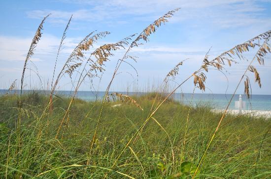 Harrington House Beachfront Bed & Breakfast: Natural plantings