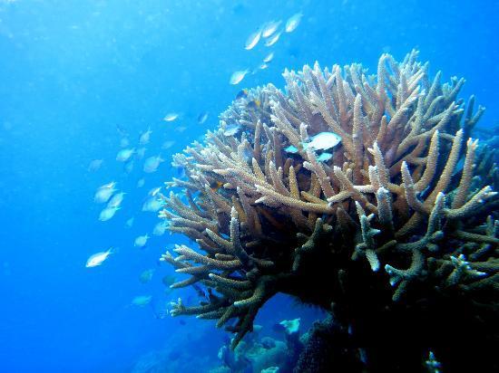 فولي فولي بيتش: Reef Shot