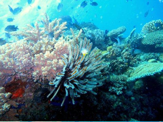 Volivoli Beach Resort Fiji: Crinoid Along Wall