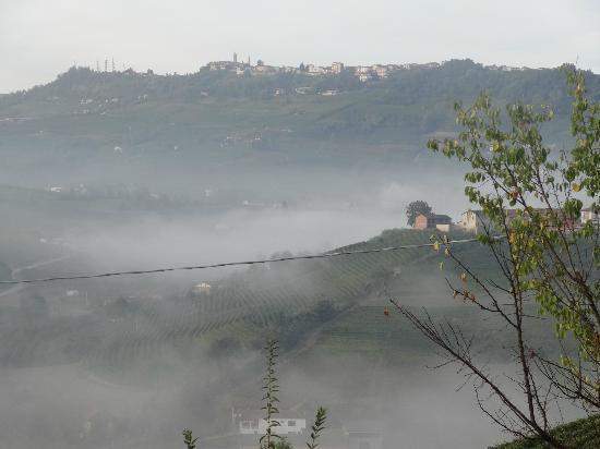 Il Vigneto: Morning Fog