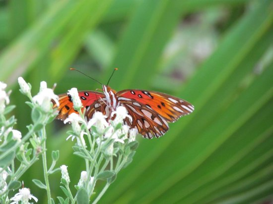 Conservation Park: Butterfly & Flower