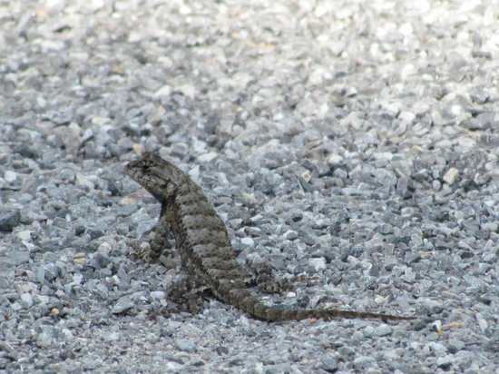 Conservation Park: Dozens of Adorable Lizards Sunning