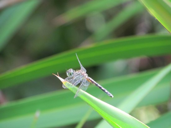 Conservation Park: Dragonfly