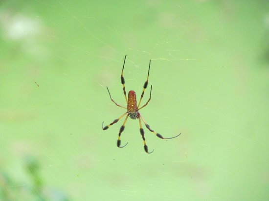 Conservation Park: Another Type of Spider