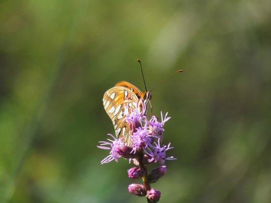 Conservation Park: Butterfly and Flower