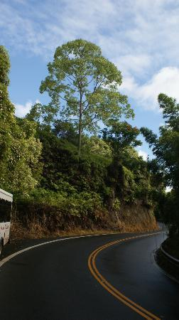 Road to Hana Tours: The road