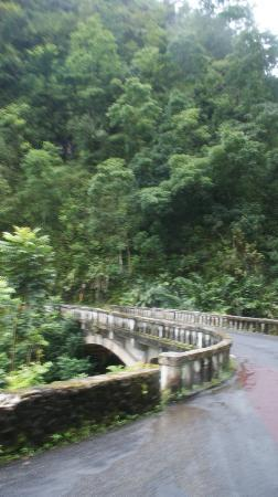 Road to Hana Tours: forest