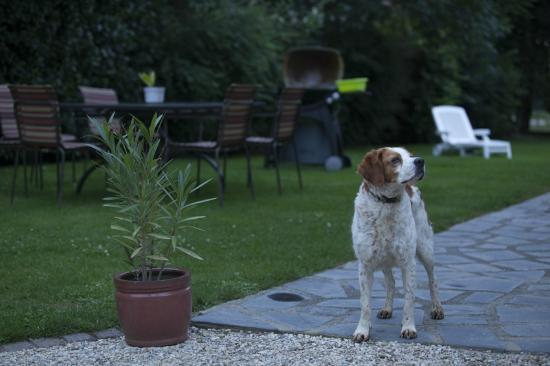 Ferme du Mouchel : La chienne