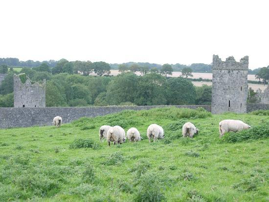 Lawcus Farm Guest House: Kells