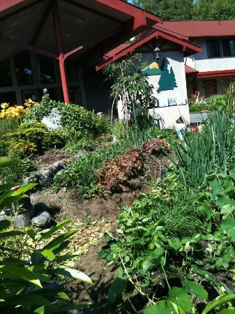 Sequim Bay Lodge: Edible garden by the lobby