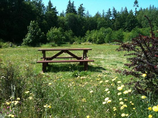 Sequim Bay Lodge: picnic table in the field