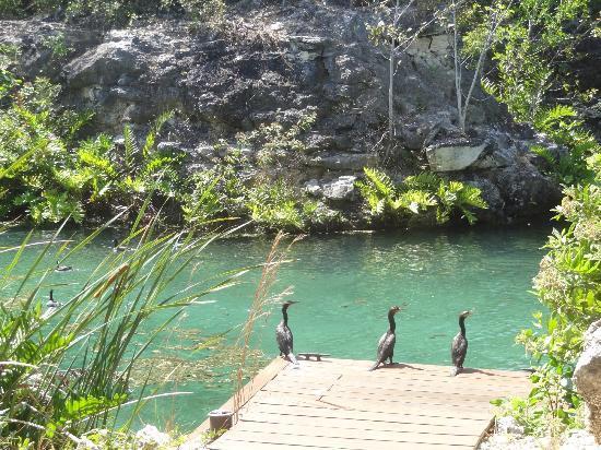 Rosewood Mayakoba: Ducks