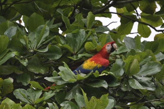 Crocodile Bay Resort - An All-Inclusive Resort: Beautiful birds