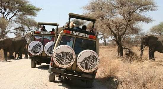 Safaris-R-Us - Day Tours: Clients Getting Up Close & Personal With A Herd Of Elephants!