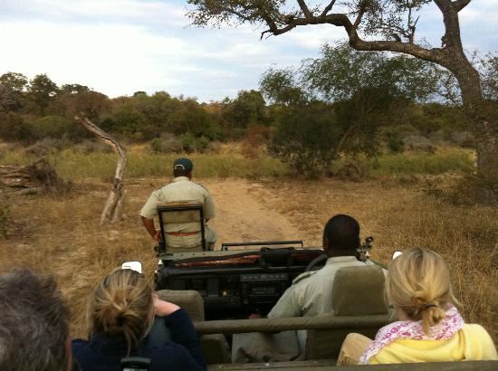 Big Six Tour Safaris: Looking forward from our all-terrain vehicle on a safari in a private game reserve outside Kruge
