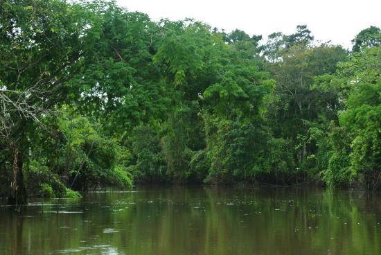 Renaco Lodge: River