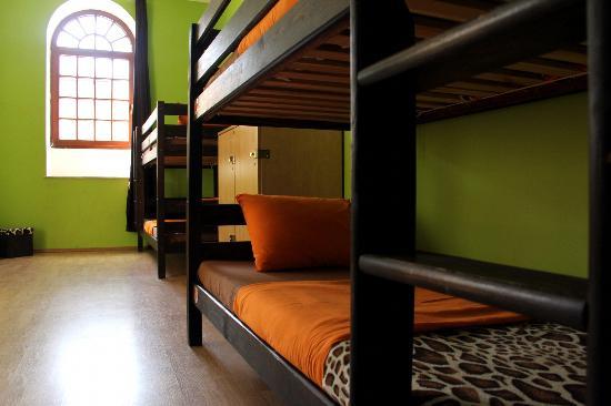 Hostel Giraffe: Dorm room