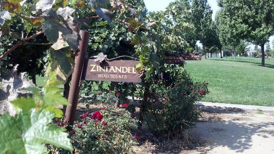 Lodi, CA: Lovely grapes