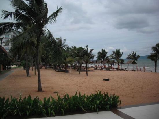 Pinnacle Grand Jomtien Resort: Strand mit Palmen und Liegen